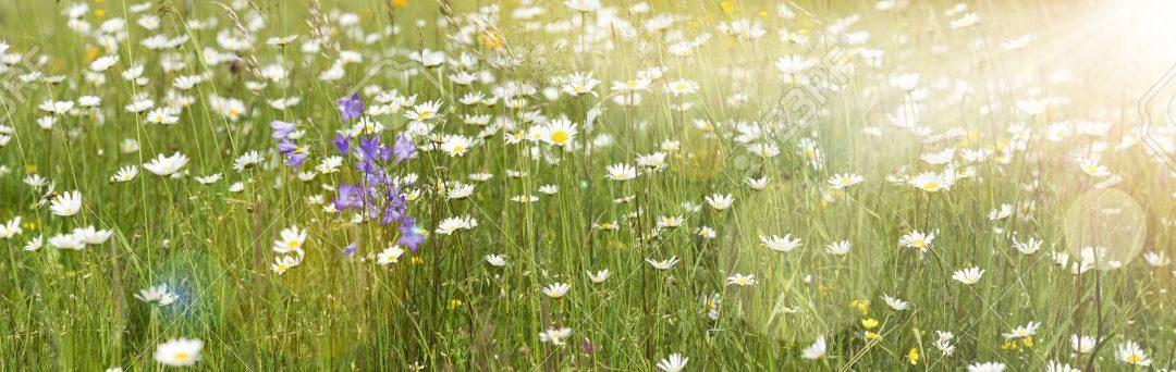 Solární alergie a senná rýma